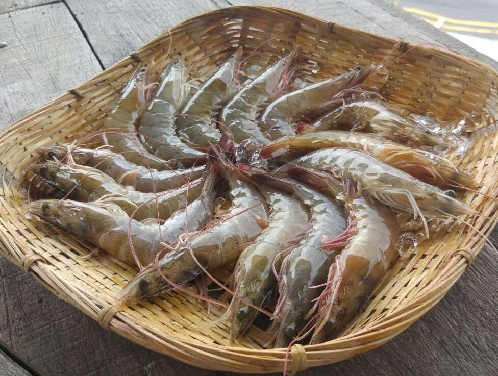 Fresh Frozen Prawn 2KG