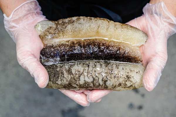 Sandfish Sea Cucumber(Tu Sheng), 500g/pkt