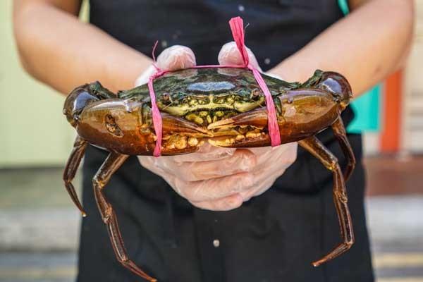 Indonesian Mud Crabs